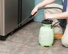 You Can Try These 4 Tips To Exterminate Mice At Home